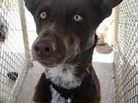Marley (the Husky mix)'s story PAW Animal Shelter is a