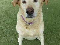My story Marley #2 is a 8-year-old spayed female yellow