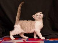 Marlow is a sweet heart, very playful and purrs as soon