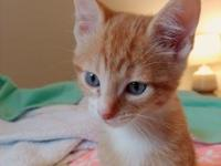 Marmalade's story Marmalade is a cheerful orange and