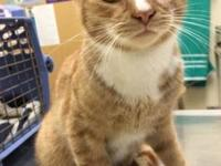 Marmalade's story FOCCAS is a foster home based rescue