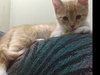 Marmalade2's story Marmalade entered our foster program