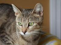 Marmee - MEET ME @ PETCO 8/18's story This cat is ready