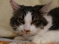 Marnie's story My name is Marnie, I am a shy kitten,