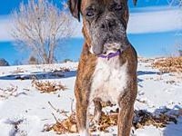 Marry Poppins's story I am a 6 year old female brindle