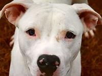 Marshall-URGENT's story We do not euthanize any dogs,