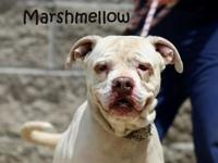 Marshmallow's story No kids but still goes all out for