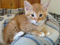Marshmallow is a sweet and affectionate male 8 month