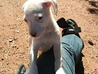 My story The adoption fee is $400 and includes