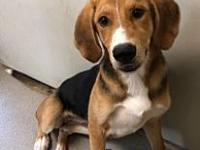 My story Martha is a 8-10 month old hound. She is a