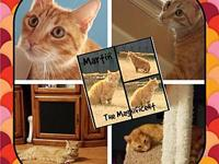 Martin's story Martin is a very sweet and calm cat. He