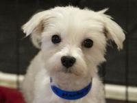 Marty's story Hi there! I was recently rescued by