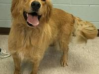 Marvel***ADOPTION PENDING***'s story For more