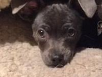 Marvin - Adopted!'s story ADOPTED! Our appreciation to
