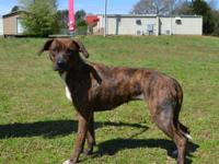 Mary is a darling 2-3 year old Mixed Breed dog,