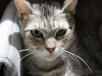 Mary Lou's story Primary Color: Brown Tabby Weight: