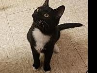 My story This cute little tuxedo may be a little shy at