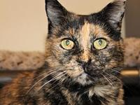 Mary Meowsie's story Mary Meowsie came to Purrfect Pals