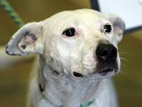 MARYANN's story MEET MARYANN! A 1-2 year old, female,