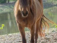 Masika is a sweet 14.0hh and lovable little girl. Her