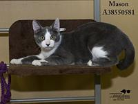 Mason's story All cats in the adoption program are