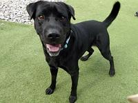 My story Mason #2 is a 2-year-old neutered male black