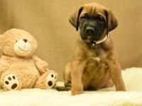 Ernie is a very sweet and fun pup who is laid back,