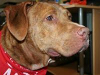 Mastiff - Red - Large - Adult - Male - Dog About me: