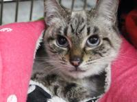 Mata Hari is a stunning older kitten looking to find