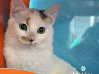 Matilda's story Matilda is a 3 month old Domestic