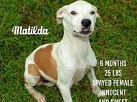 Matilda's story FOSTER NEEDED THURS 10/18/18 Animal