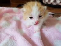 Kitten still in foster care - but we are taking