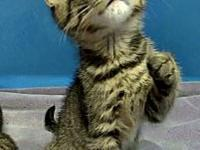 Matrix's story Matrix is a brown tabby domestic