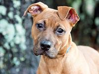Mattie's story Mattie was pulled from a KILL shelter at