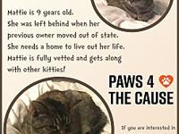 Mattie's story This beautiful tabby girl is the perfect