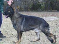 VonIssk has 2 mature and 1 teenaged purebred AKC German