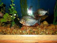fish aquarium fish Pets and Animals for sale in Pennsylvania - Puppy