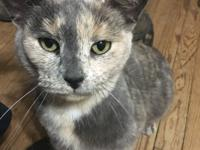 Maude is a sweet cat who wants her forever home sooner