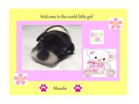 Maudie, who is a 2 week old (born upon July 18, 2014)