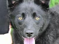 Maui's story I am 8 months old and 41 pounds. I was