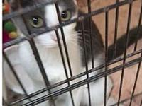 Mauna Ming's story This young mama cat is a rescue. She