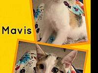 My story Meet Mavis! She is a very playful little
