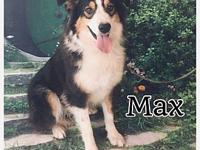 Max's story Name: Max Breed: Aussie Mix D.O.B: Feb 17