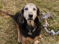Max's story Max is a sweet older gentleman that needs a