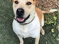 Max's story Available to foster or adopt! Breed: Cattle