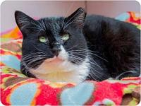 Max's story Say hi to Max, he is a six year old tuxedo