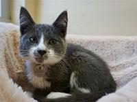 Max's story I am a playful kitten who loves to