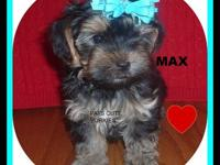 MAX is such a cutie1 Full of energy and very loveable.