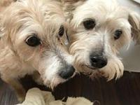 Max(M) & Katie(F) BONDED PAIR -Harvey Affected's story