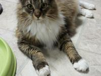 Max is a very affectionate and talkative young man. He